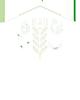 Saawa Farms